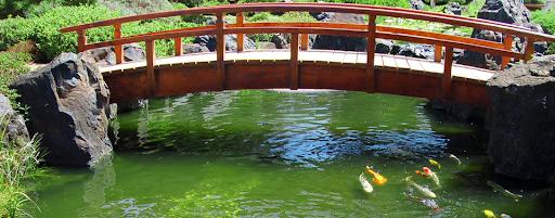 koi aquarium